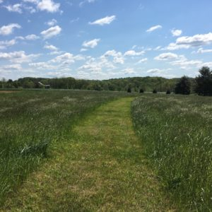 west-meadow-view-down-upper-path